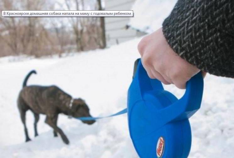 В Красноярске домашняя собака напала на маму с годовалым ребенком