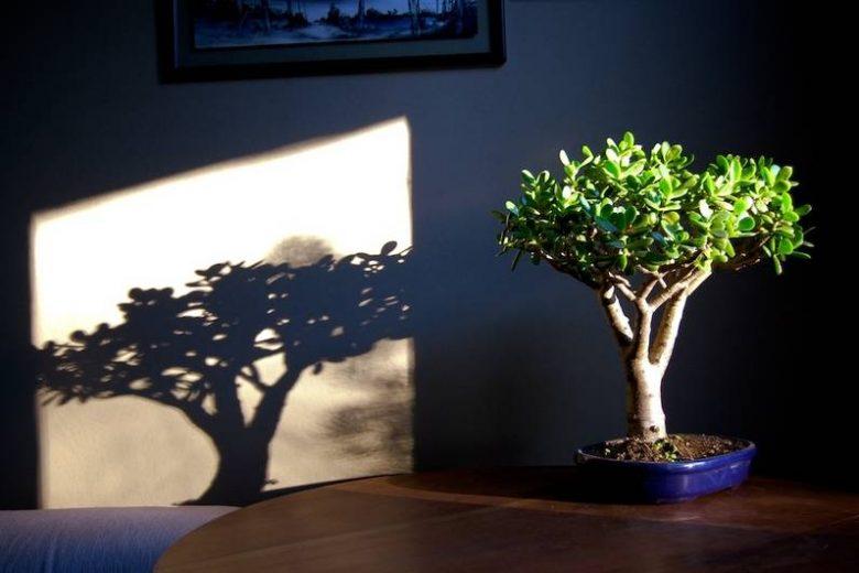 Сажаем денежное дерево правильно: как привлечь в свой дом деньги на Вербное воскресенье